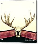 Moose Trophy Acrylic Print