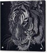 Moquito El Tigre Acrylic Print