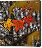 More Autumn Leaves Acrylic Print