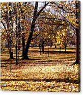 More Fall Trees Acrylic Print