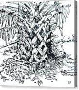 Morikami Gardens' Tree Boca Raton Florida  Acrylic Print