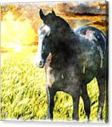 Morisco At Sunset Acrylic Print