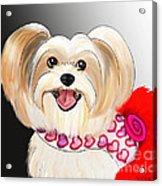 Morkie Valentine  Acrylic Print