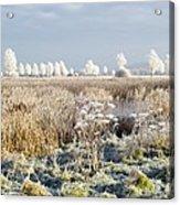 Morning Frost Acrylic Print