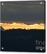 Morning Gold Acrylic Print