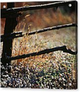 Morning Grass Acrylic Print