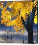 Morning Maple Acrylic Print by Rob Travis