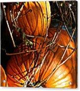 Morning Pumpkins Acrylic Print