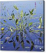 Morning Reflection Acrylic Print