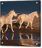 Morning Reflections Acrylic Print