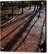 Morning Shadows Acrylic Print