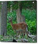 Morning Stroll 7353 1743 Acrylic Print