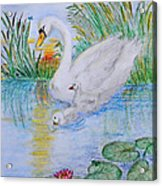 Morning Swim II  Edited Original Art Acrylic Print