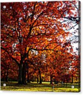 Morton Arboretum In Colorful Fall Acrylic Print by Paul Ge