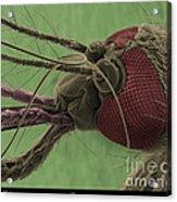 Mosquitos Head, Sem Acrylic Print