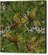 Moss And Lichen Acrylic Print