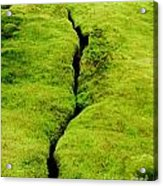Moss Forest Acrylic Print