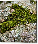 Moss In The Middle Acrylic Print