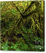 Moss In The Rainforest Acrylic Print