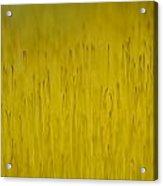 Moss In Yellow II Acrylic Print