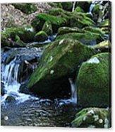 Moss Overflow Acrylic Print