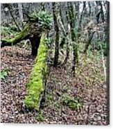 Mossey Log Acrylic Print