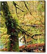 Mossy Bend Acrylic Print