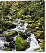 Mossy Creek Acrylic Print