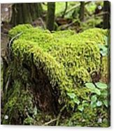 Mossy Old Stump Acrylic Print