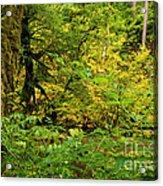 Mossy Rainforest Acrylic Print