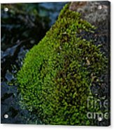 Mossy River Rock Acrylic Print