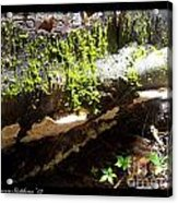 Mossy Waterfall On Mushroom Rock Acrylic Print
