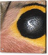 Moth Automeris Zozine Detail Of False Acrylic Print