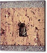 Moth On Brick Acrylic Print