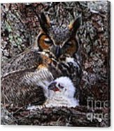 Mother And Baby Owl Acrylic Print