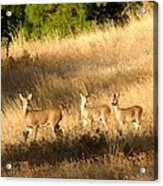 Mother And Twins Acrylic Print