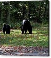 Mother Bear And Cub Acrylic Print