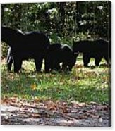 Mother Bear And Three Cubs Acrylic Print