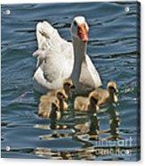 Mother Goose Plus 5 Acrylic Print