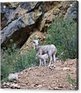Mothers Shelter Acrylic Print