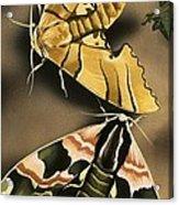 Moths Acrylic Print