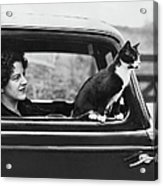 Motoring Cat Acrylic Print