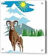 Mouflon Sheep Mountain Goat Acrylic Print by Aloysius Patrimonio