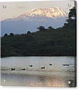 Mount Kilimanjaro Rises Above One Acrylic Print
