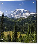 Mount Rainier With Coniferous Forest Acrylic Print