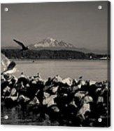 Mount Washington View From White Rock Bc Acrylic Print