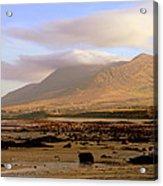 Mountain 1 Acrylic Print