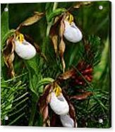 Mountain Lady's Slipper Orchid Acrylic Print
