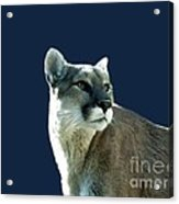 Mountain Lion Beauty Acrylic Print by Donna Parlow