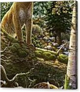 Mountain Lion With Fawn Acrylic Print by Anne Wertheim
